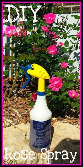 Easy Diy Bug Spray Killer For Your Rose Bushes Garden Of
