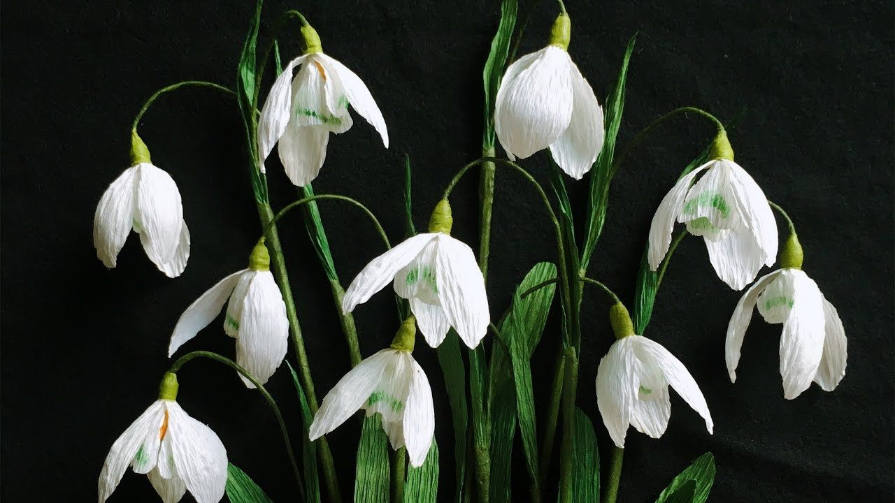 Snowdrop Or Galanthus Nivalis Have Native Of Switzerland Austria And Of Southern Europe A Legend About Th Paper Flowers Paper Flower Video Crepe Paper Flowers