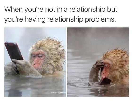 30 Memes About Relationship Funny Pictures Funny Animals Relationship Memes
