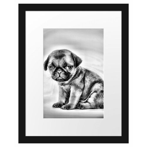 Small Pug Puppy Framed Photographic Print East Urban Home Small