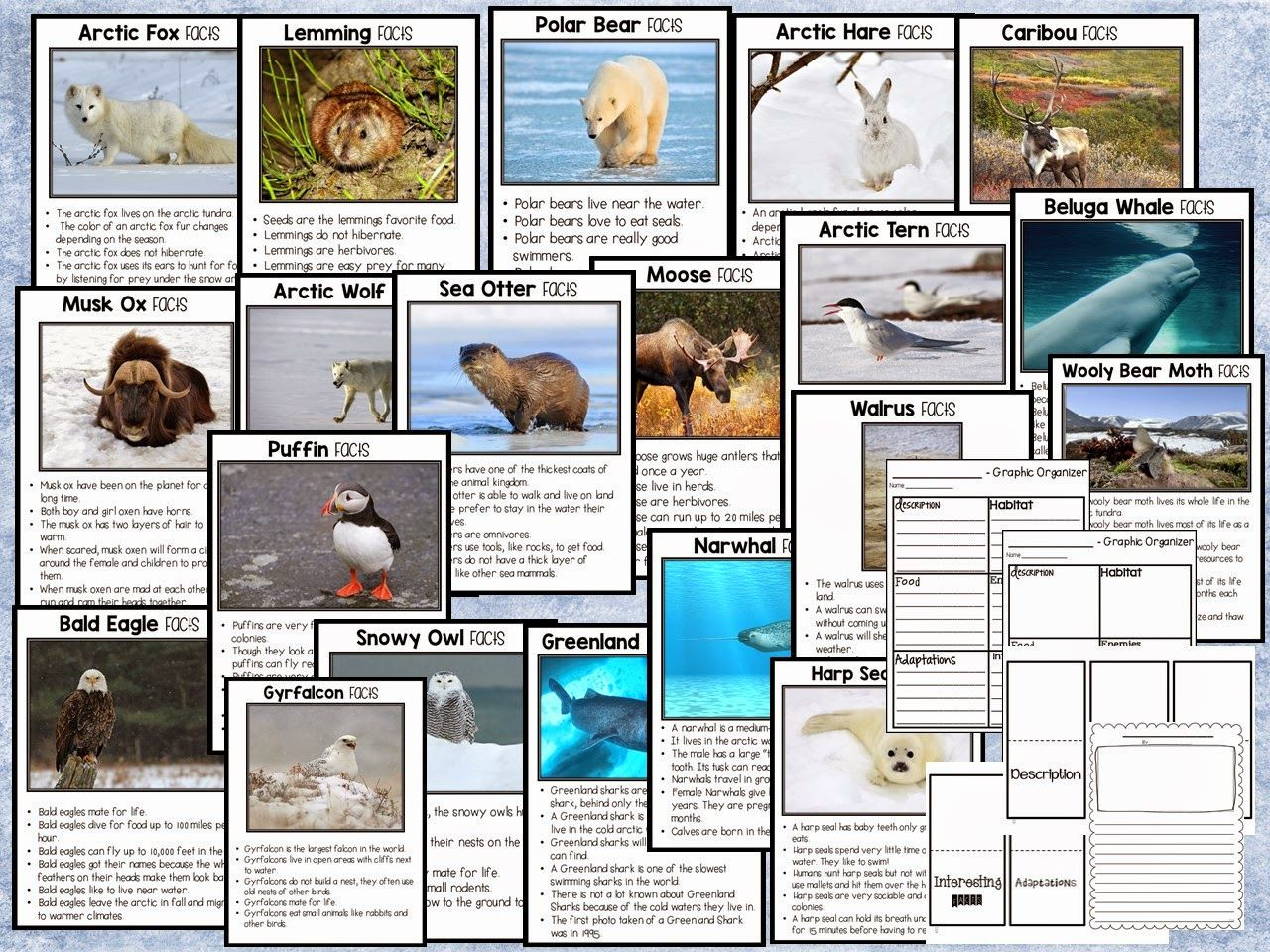 Arctic Animal Fact Sheets Perfect For Arctic Animal
