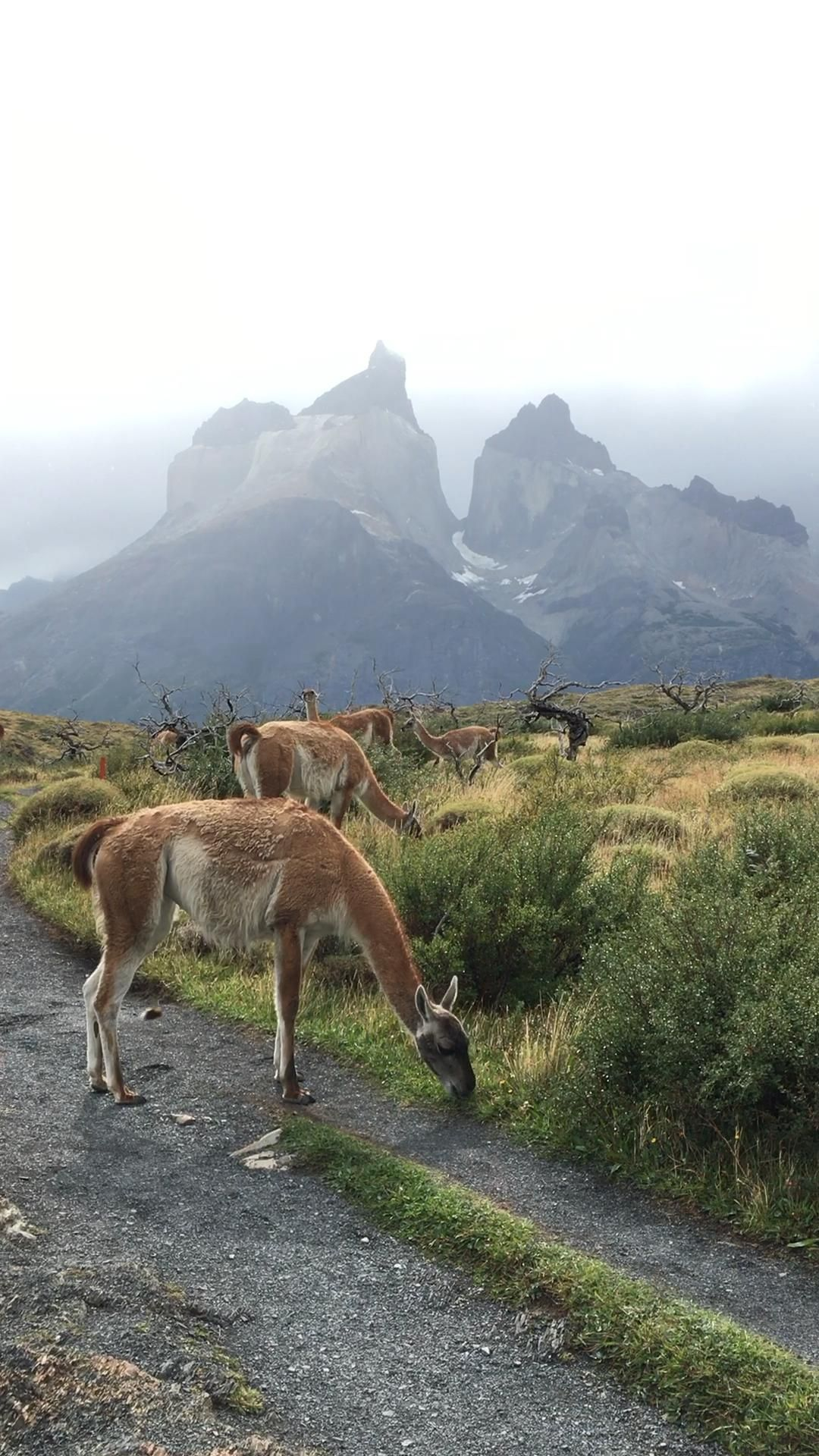 Torres Del Paine Park In Chile -   17 most beauty Wallpaper ideas