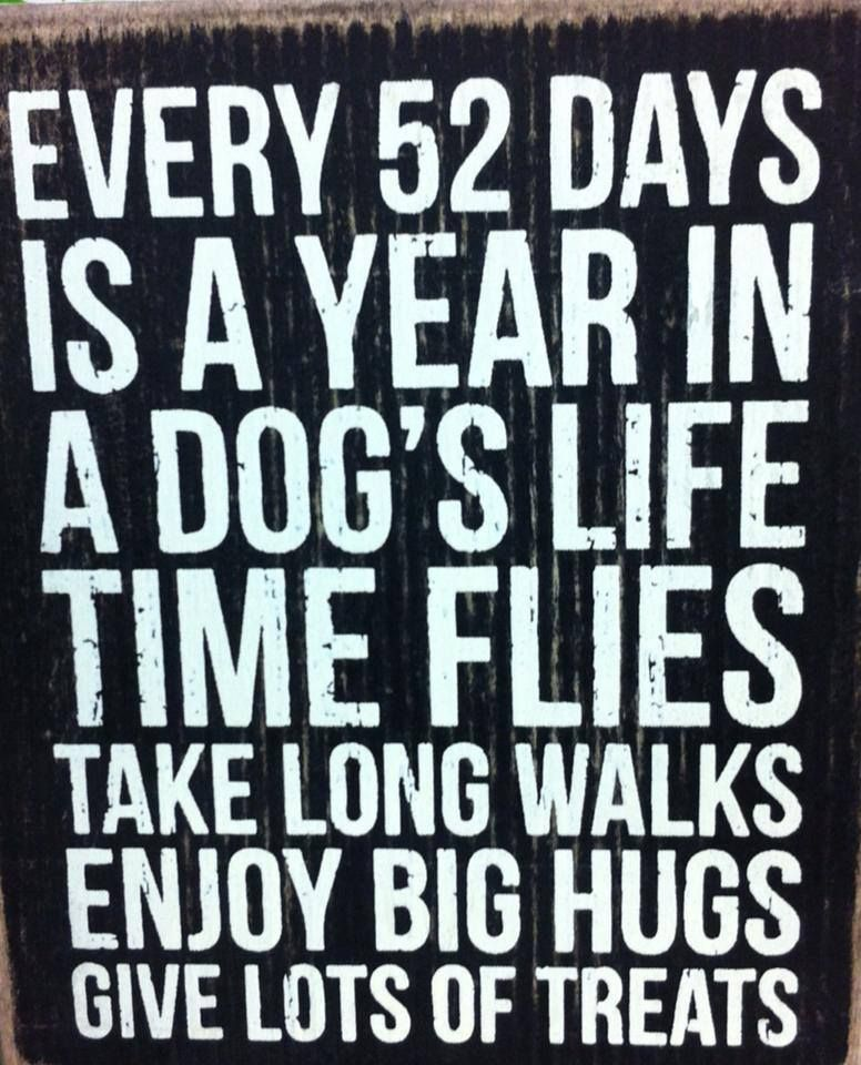 Time Flies Quickly Quotes: Quotes About How Time Flies. QuotesGram