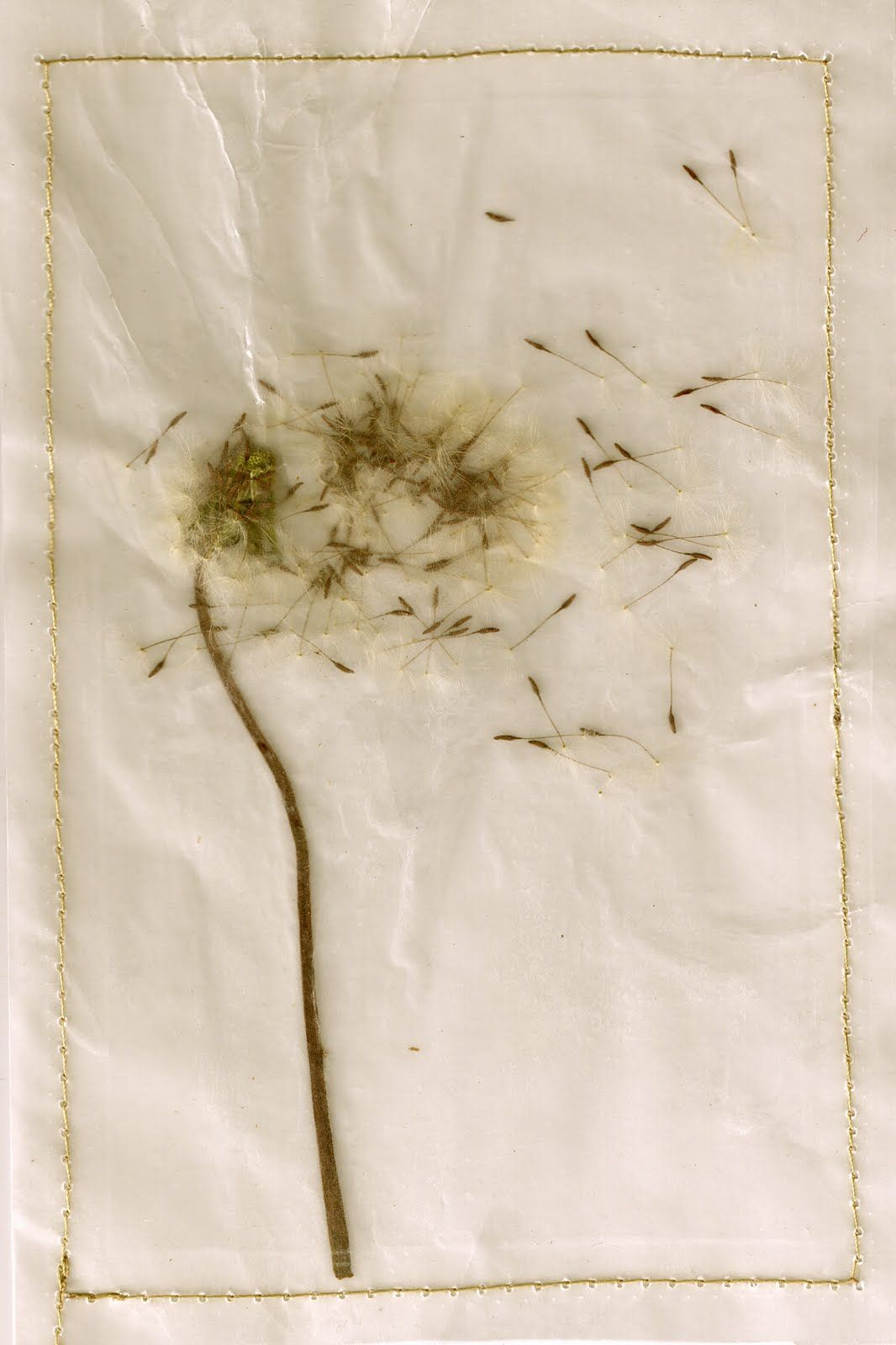 A sweet dandelion i pressed between two sheets of waxed paper and a a sweet dandelion i pressed between two sheets of waxed paper and a tiny iron mightylinksfo