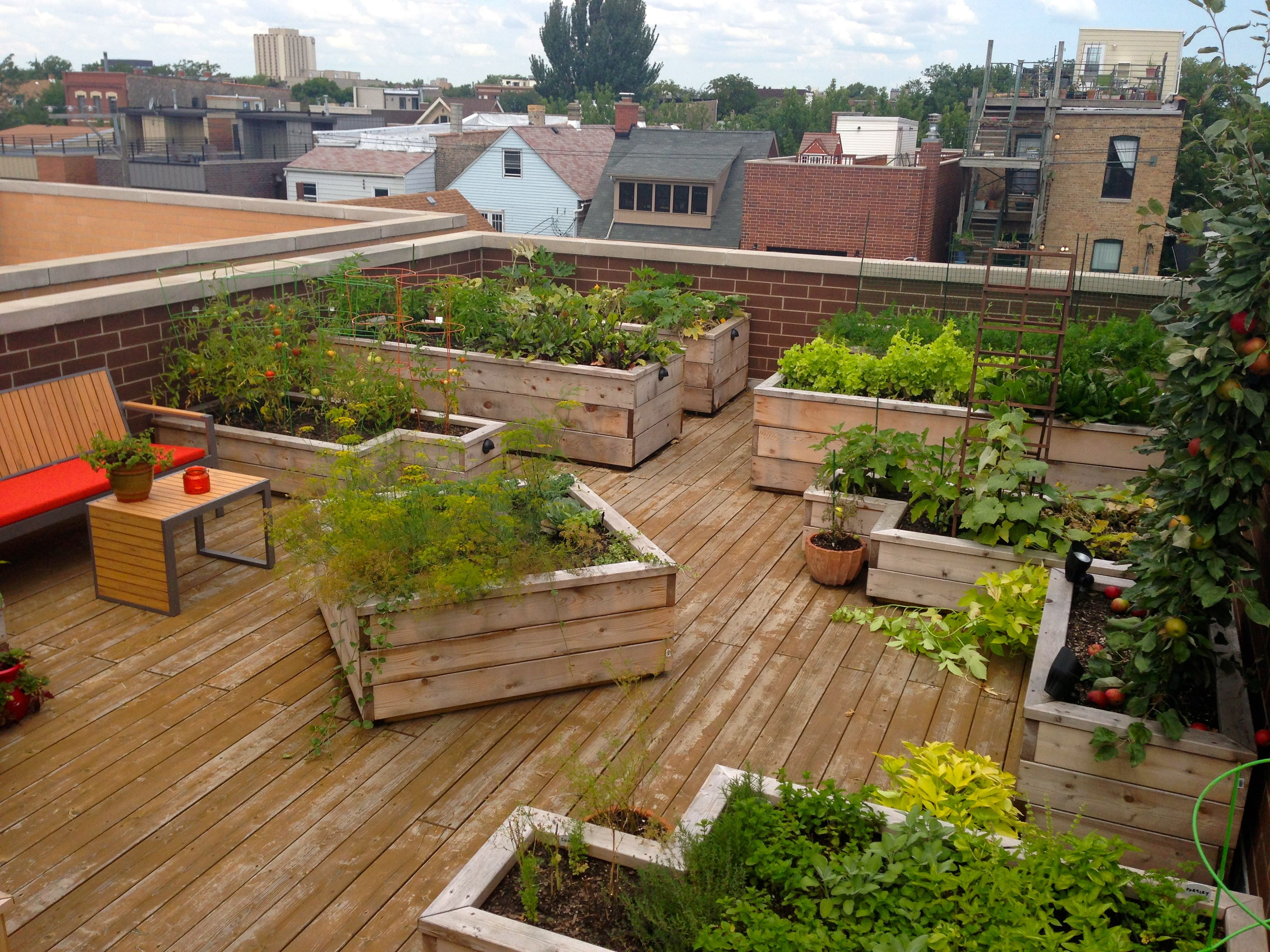 City rooftop vegetable garden designed by botanical for Rooftop patio garden ideas