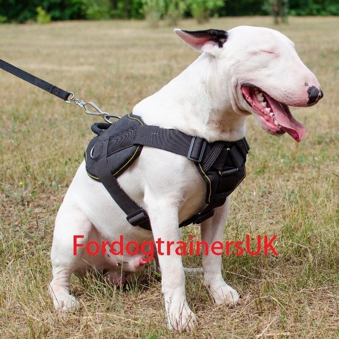 Bull Terrier Harness For Sale English Bull Terrier Harness With Handle New Mur Vegetal