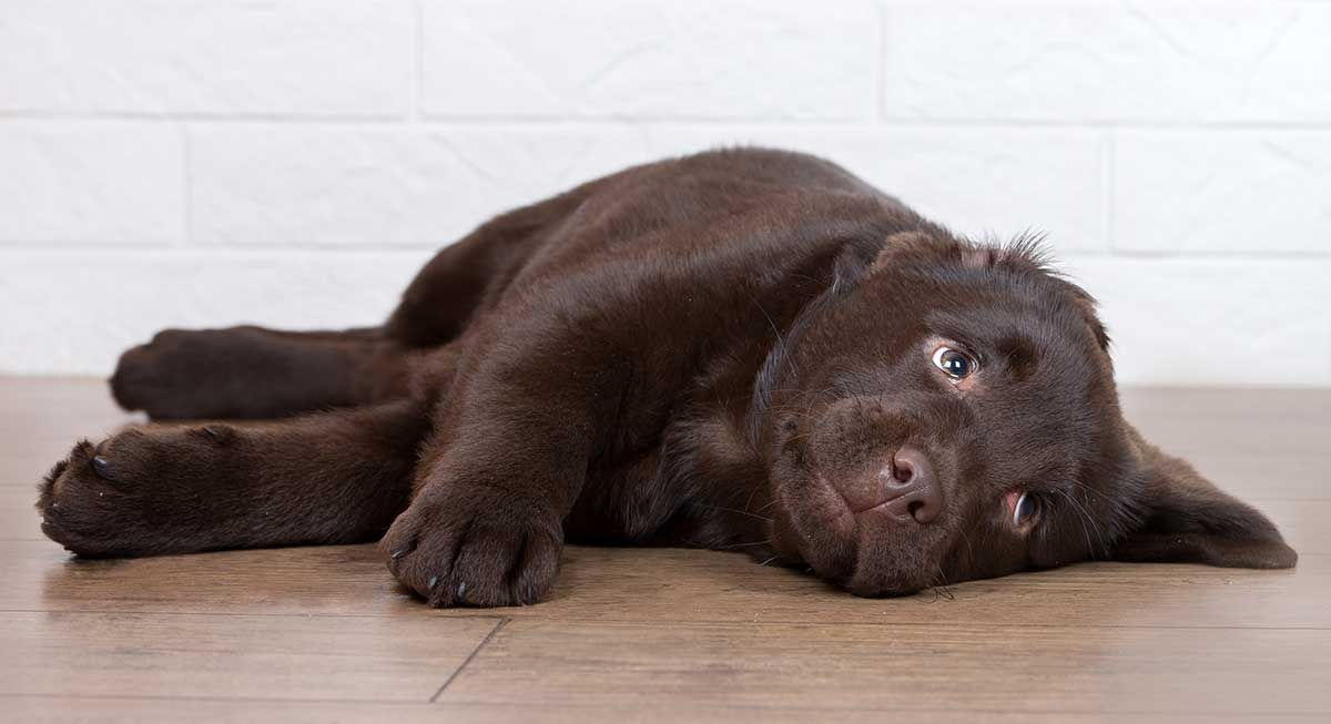 Is Your Dog Barking At Night Help Your Dog Sleep And Prevent Early Waking Dog Barking At Night Dog Barking Sleeping Dogs