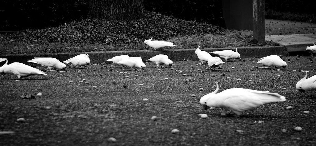 Park Art My WordPress Blog_How Much Does It Cost To Spay A Rabbit Nz