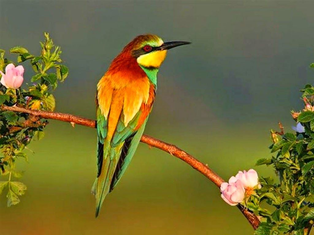 صـــور بــــلا حـــدود أ جمل صور الطيور في العالم بجودة عالية Nature Birds Beautiful Birds Tropical Birds