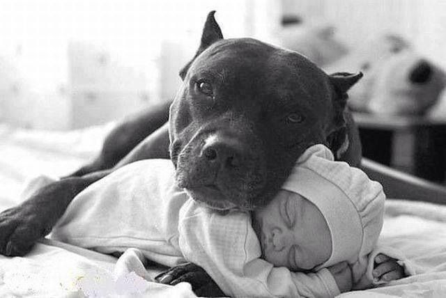 bully & baby | Mamarazzi | Pinterest | True nature, Dog ...