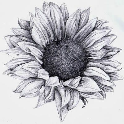 Photo of brushstrokes, etc.: Sunflower tattoo