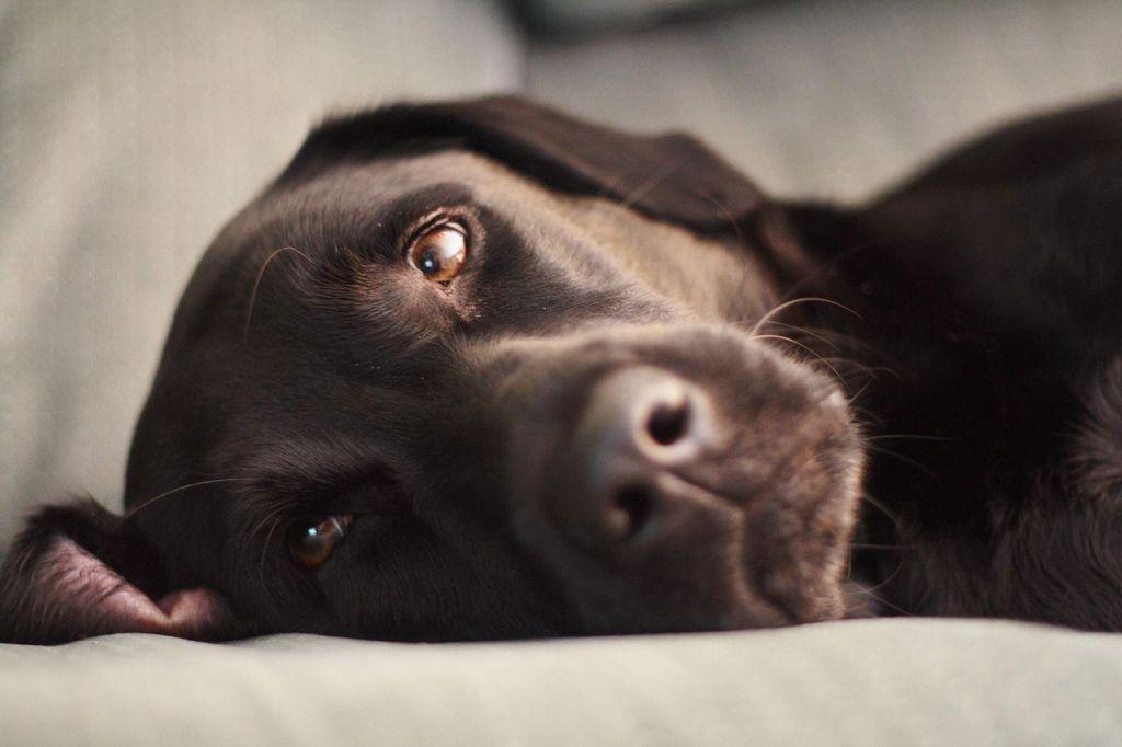 10 Natural Ways To Minimize Dog Shedding Pet Ideas
