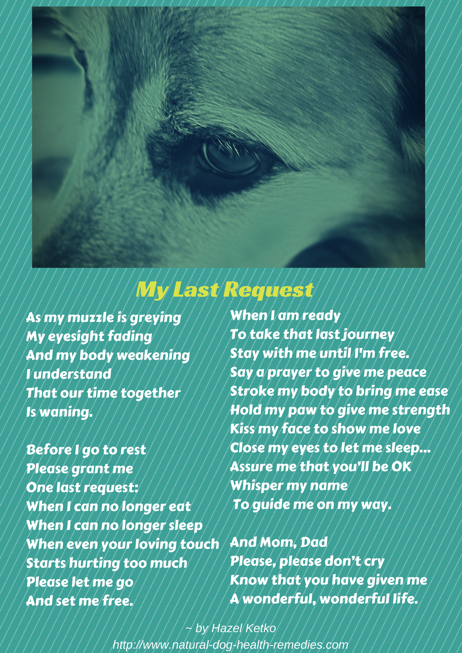 A poem for all dog parents, especially those with aging