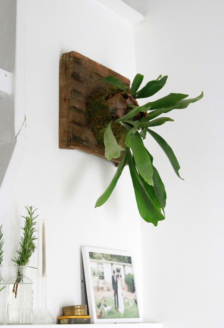 The Fern And I How To Hang A Diy Staghorn Fern