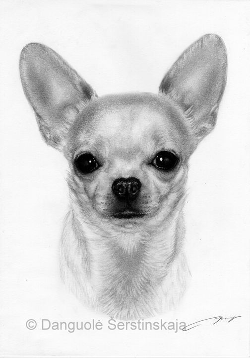 Chihuahua Painting Petdrawings Chihuahua Drawing Dog Tattoos
