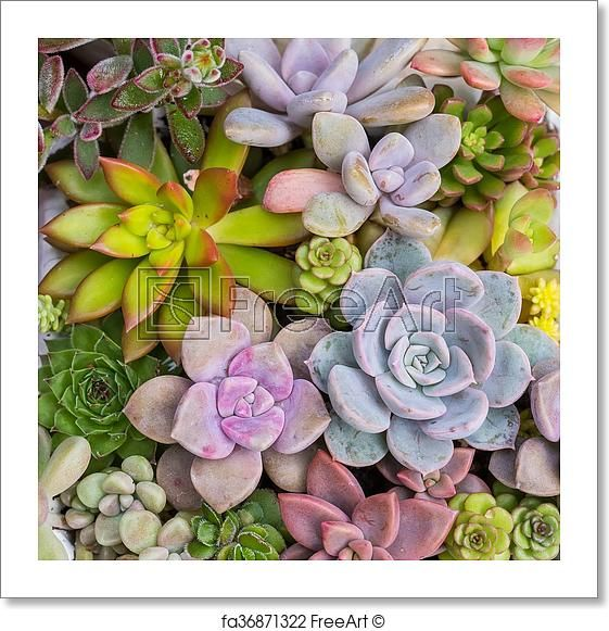 110 Succulent Art Prints Ideas In 2021 Succulent Art Small Art Prints Art Prints
