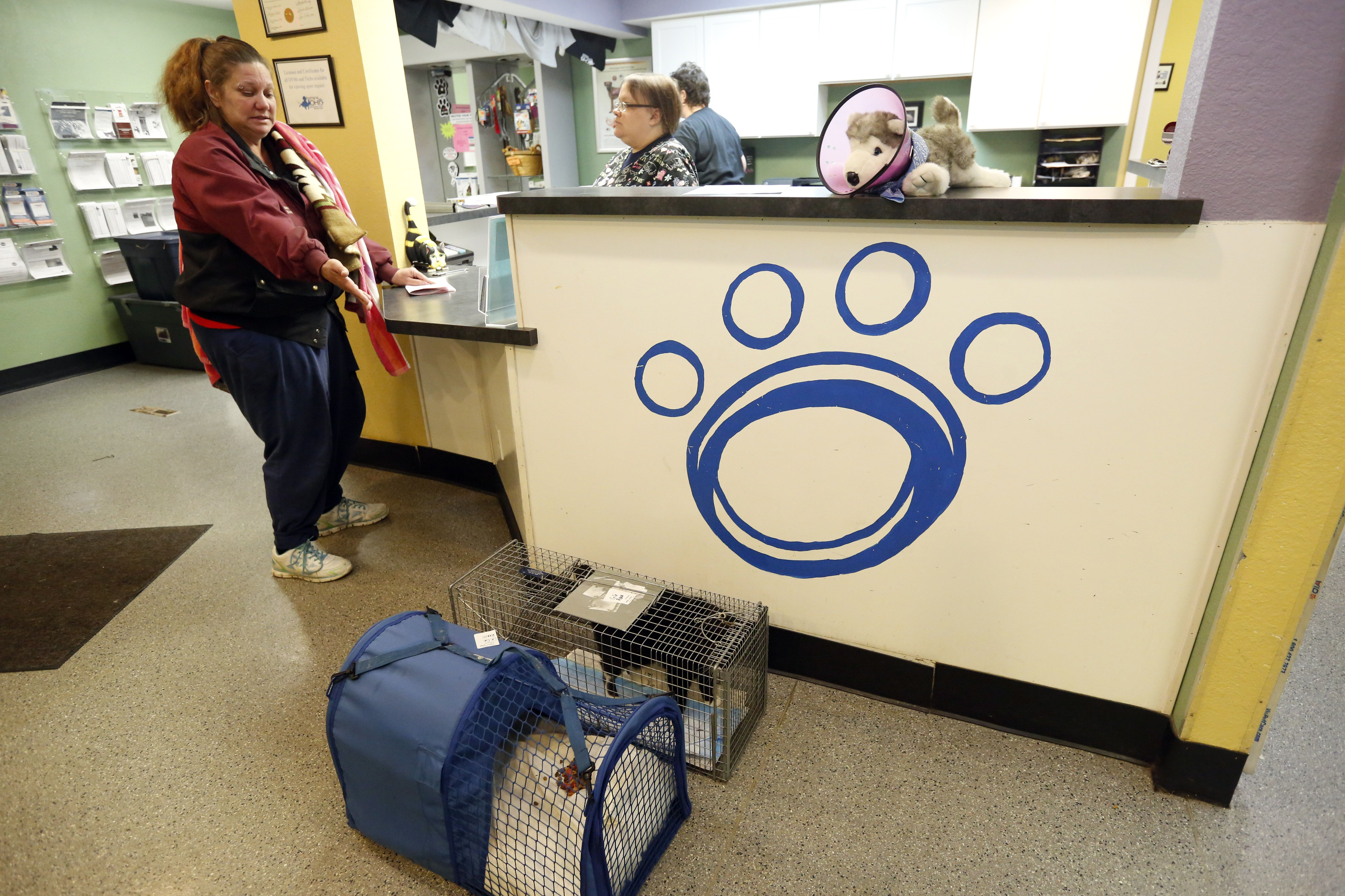 Humane Ohio offers sale on spaying cats  The spay/neuter clinic in West Toledo will spay owned female cats for $20 apiece in February and March, supported by a grant from PetSmart Charities.
