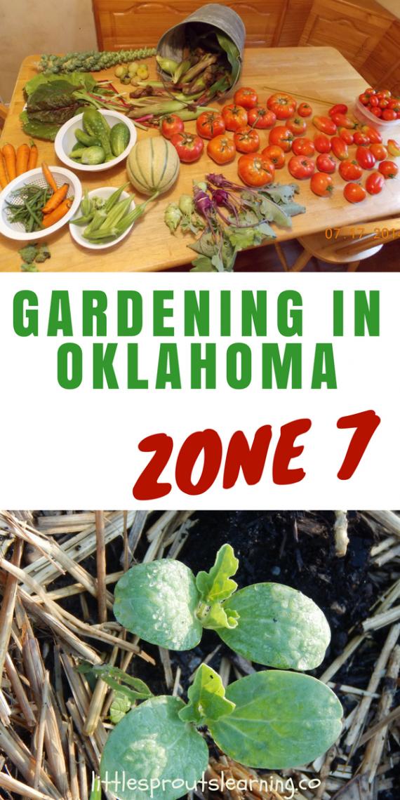 Gardening Oklahoma Zone Ingardening In Oklahoma Zone 7