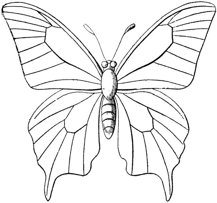 25++ Monarch butterfly line drawing clipart information