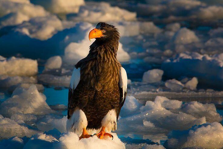 Sea Eagle by Prasit Chansareekorn