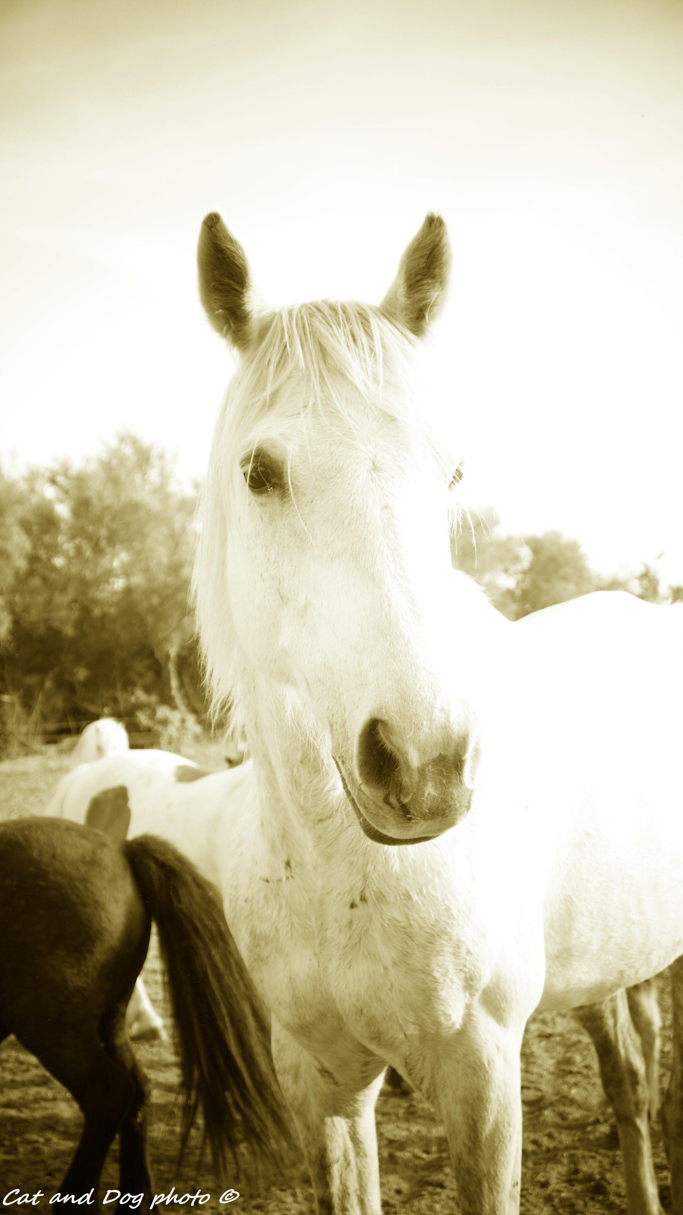 cheval blanc portrait