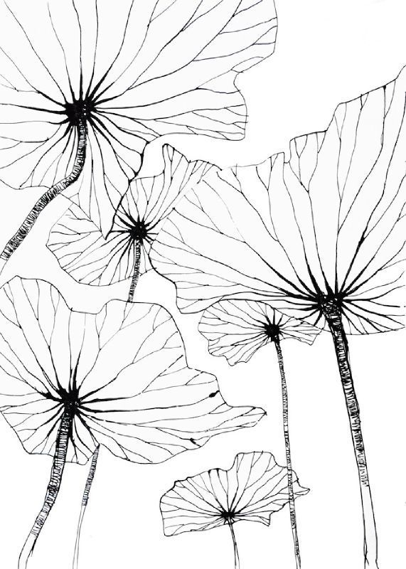 Lotus By Stéphanie Ledoux Comment Dessiner Une Fleur