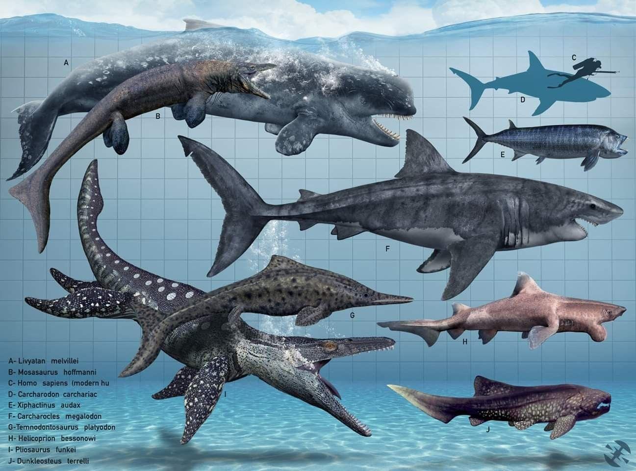 Sea creatures Prehistoric creatures