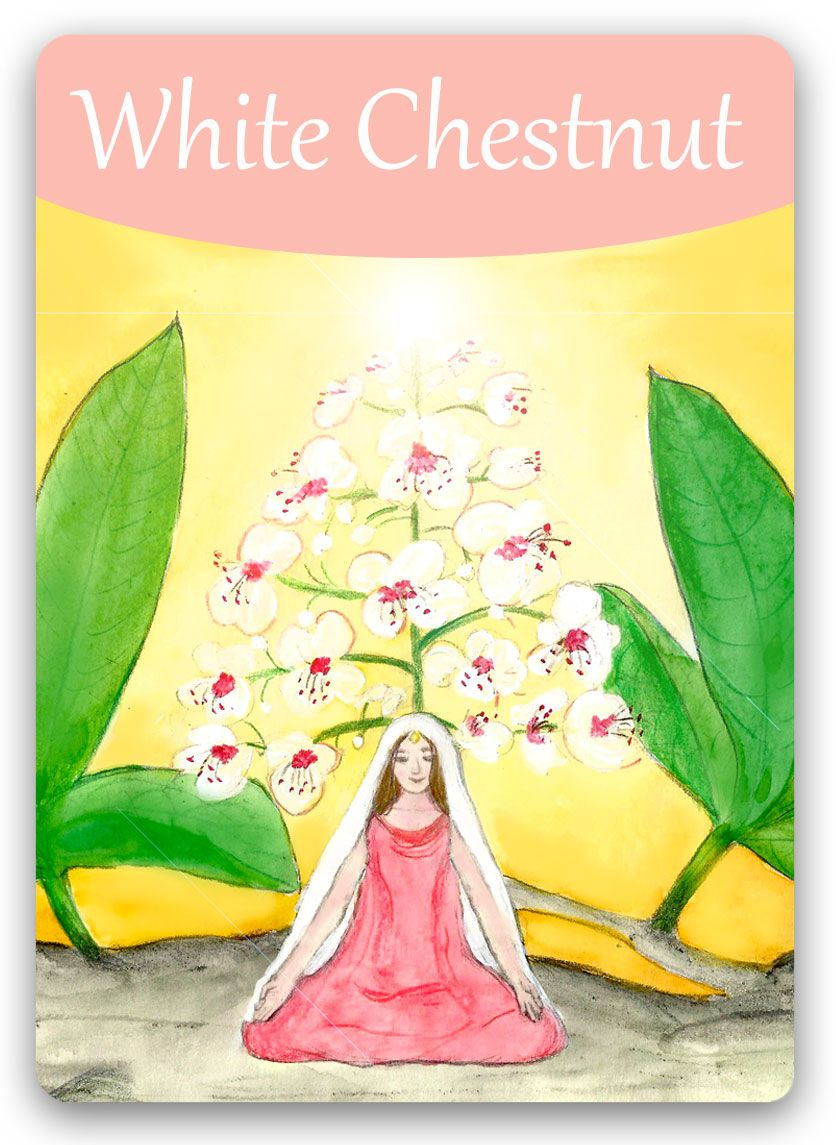 Bach Flower Cards White Chestnut Negative White Chestnut State