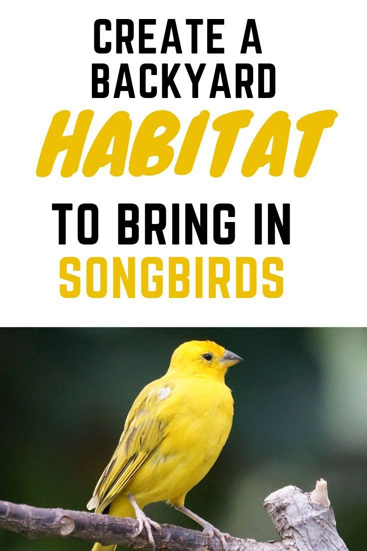 Attracting TONS of Songbirds to your backyard! Finches ...