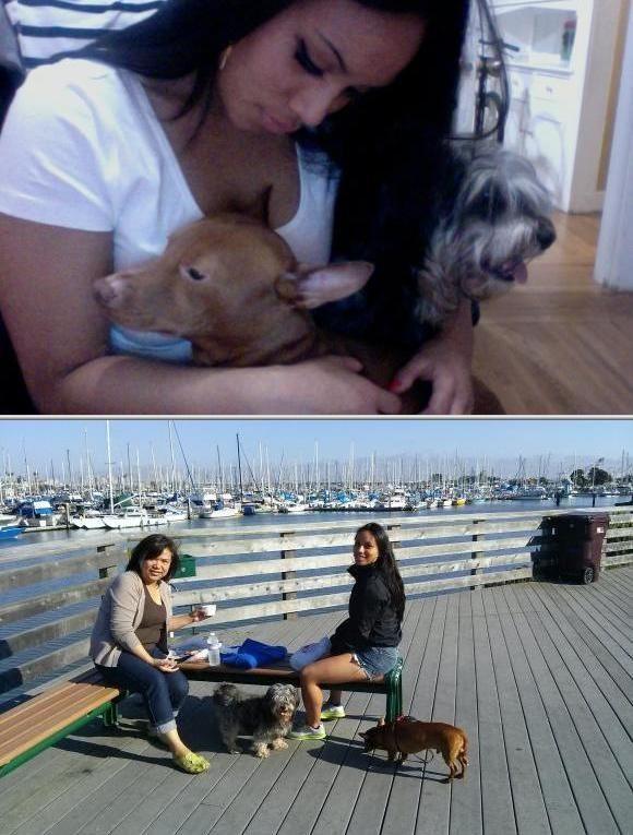Dog Walking Pet Sitting Services Pet Sitters Pet Trainer