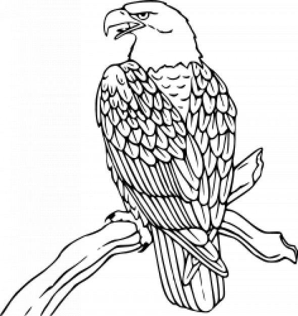 El aguila calva para colorear - Imagui | Tatuajes | Pinterest ...