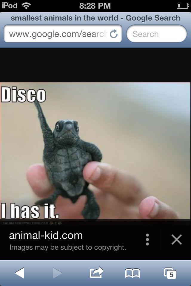 Disco yep I love it!!!