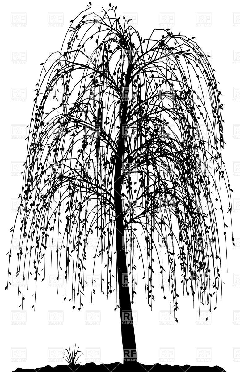Weeping Willow Tree Black And White Tattoo High detailed willow t...