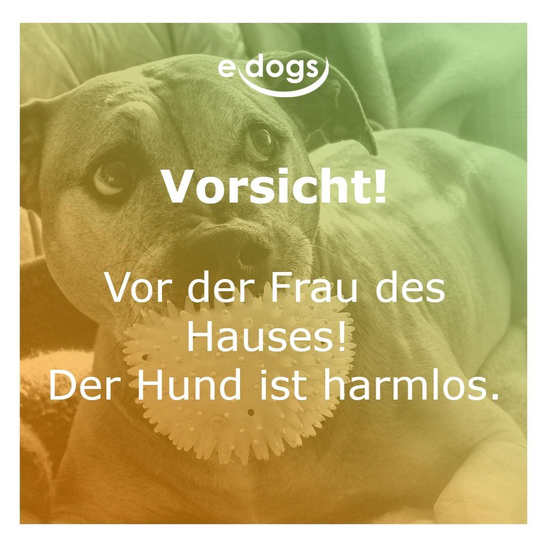 frauen sind gefährlicher als hunde! -hundeliebe - hund und