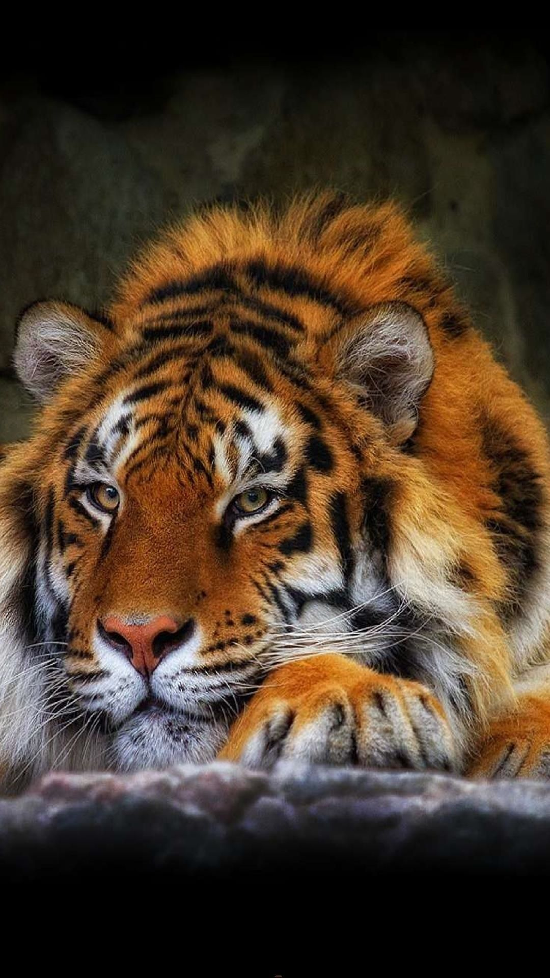 Wallpapers For Samsung Galaxy S4 Thousands Of Hd Wallpapers For Your Samsung Smartphone In 1080x1920 Resolution Wild Cats Tiger Wallpaper Animals