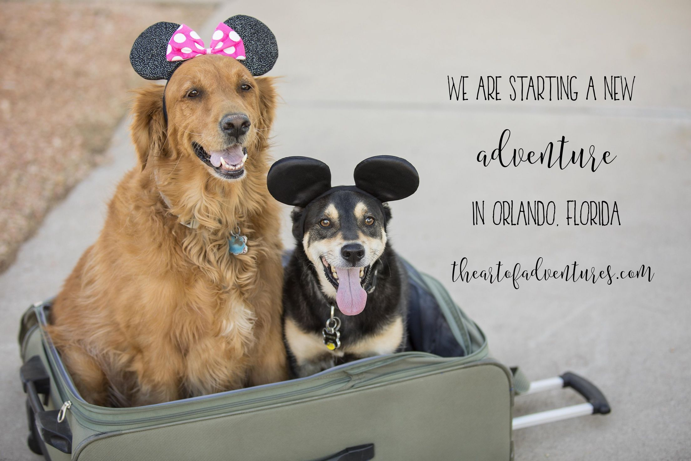 Moving Announcement Dogs Are Excited That We Are Moving To