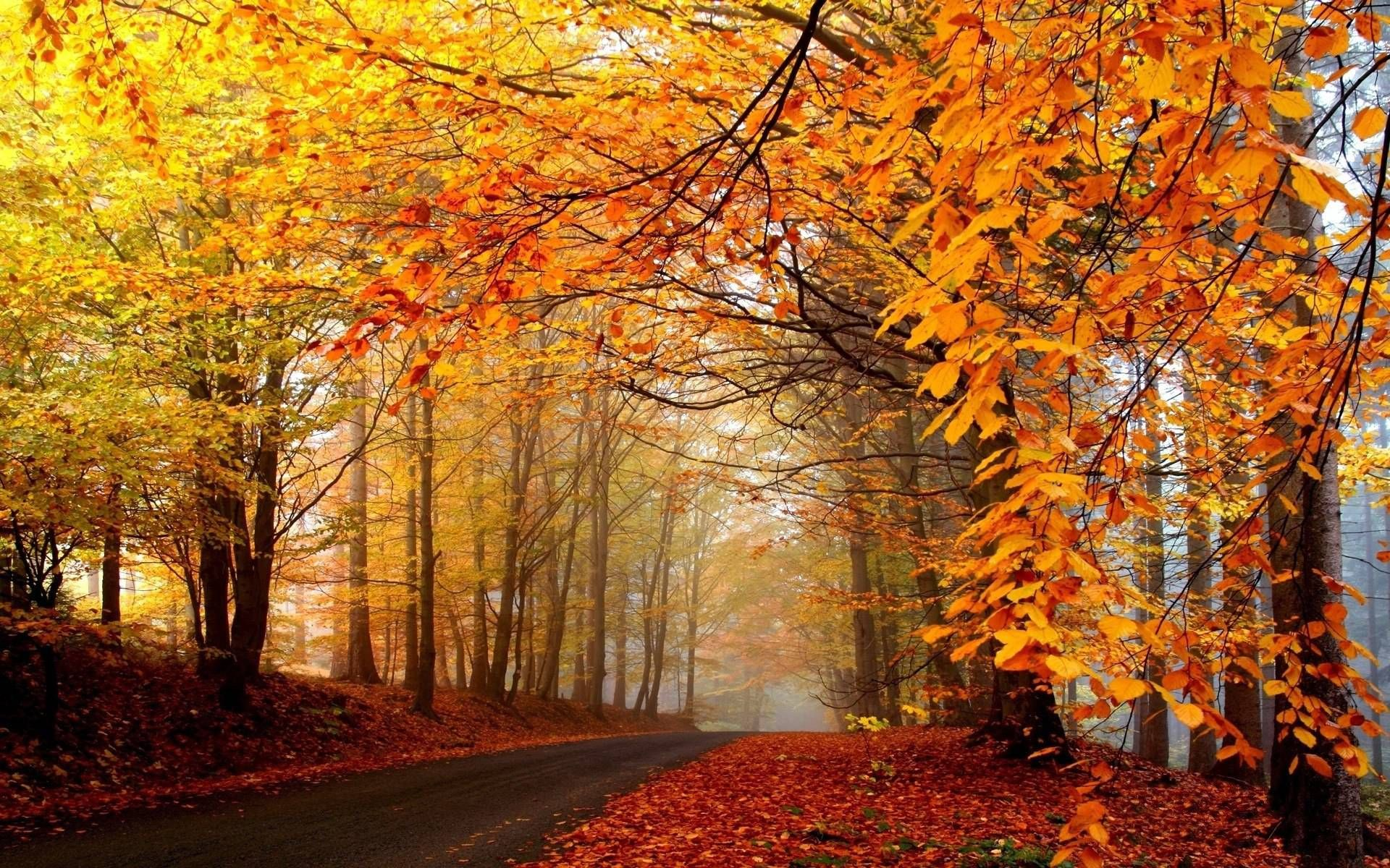 Wallpapers For Fall Trees Background Autumn Landscape Scenery Wallpaper Autumn Scenery