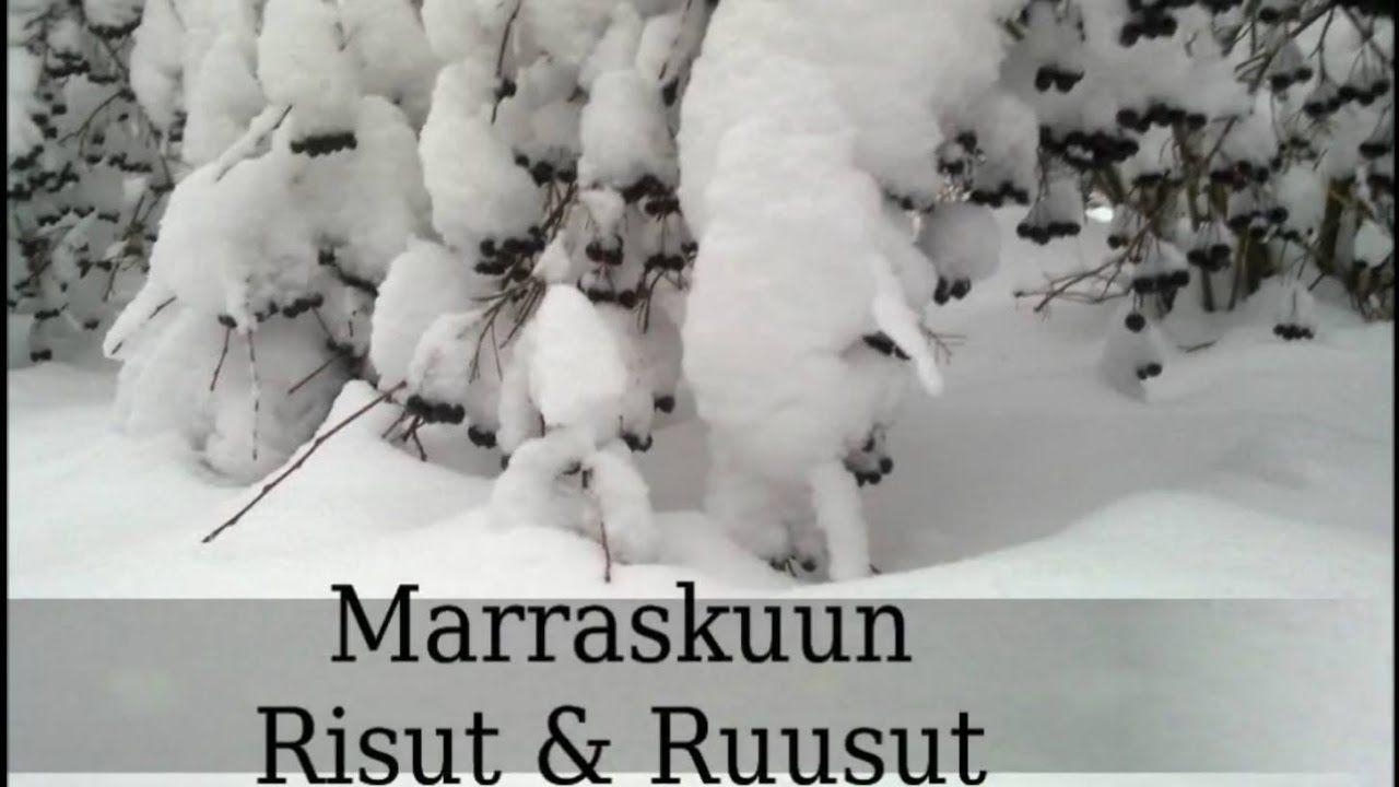 Risut & Ruusut #1,  MARRASKUU -  Sota on täällä!