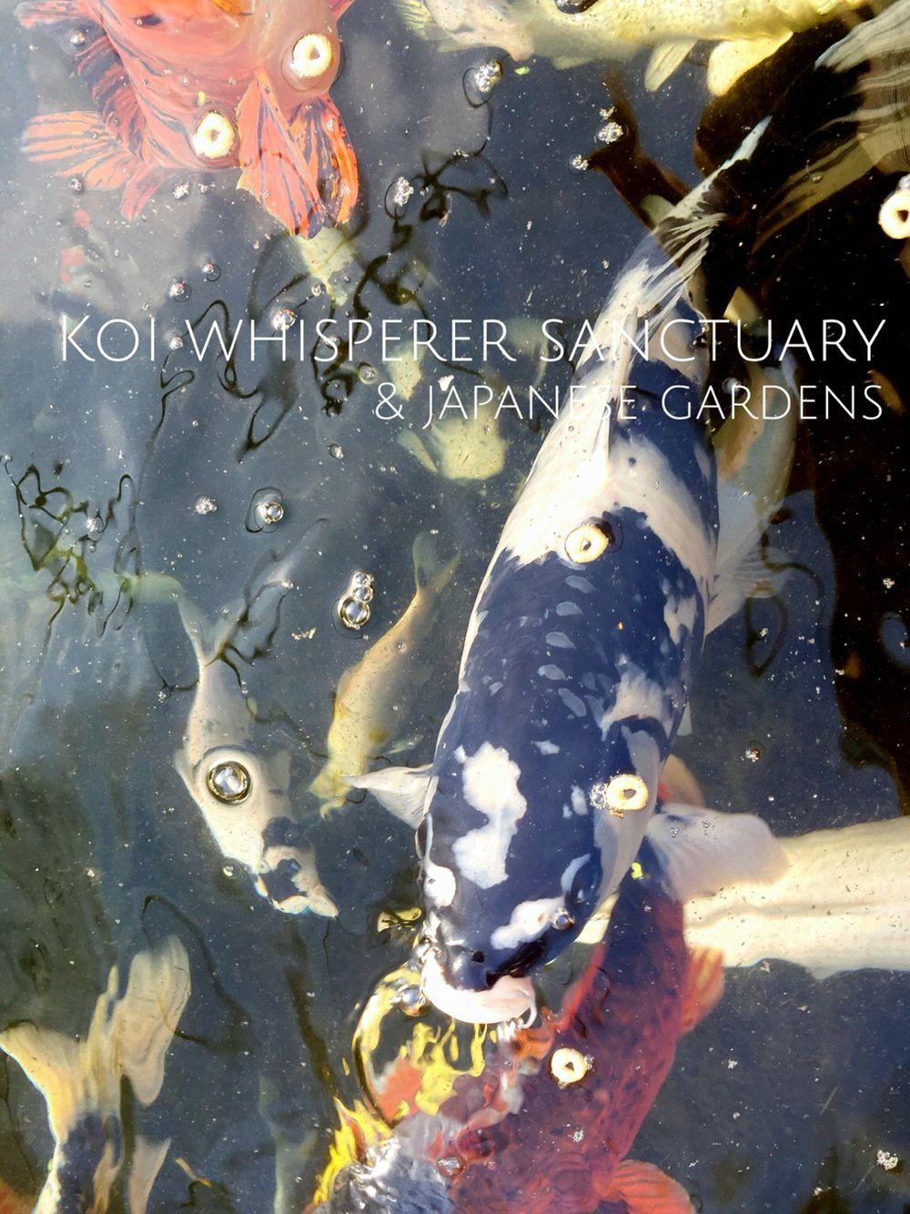 8a26bbf9f33d9c4aa8c424429e998495 - The Koi Whisperer Sanctuary & Japanese Gardens