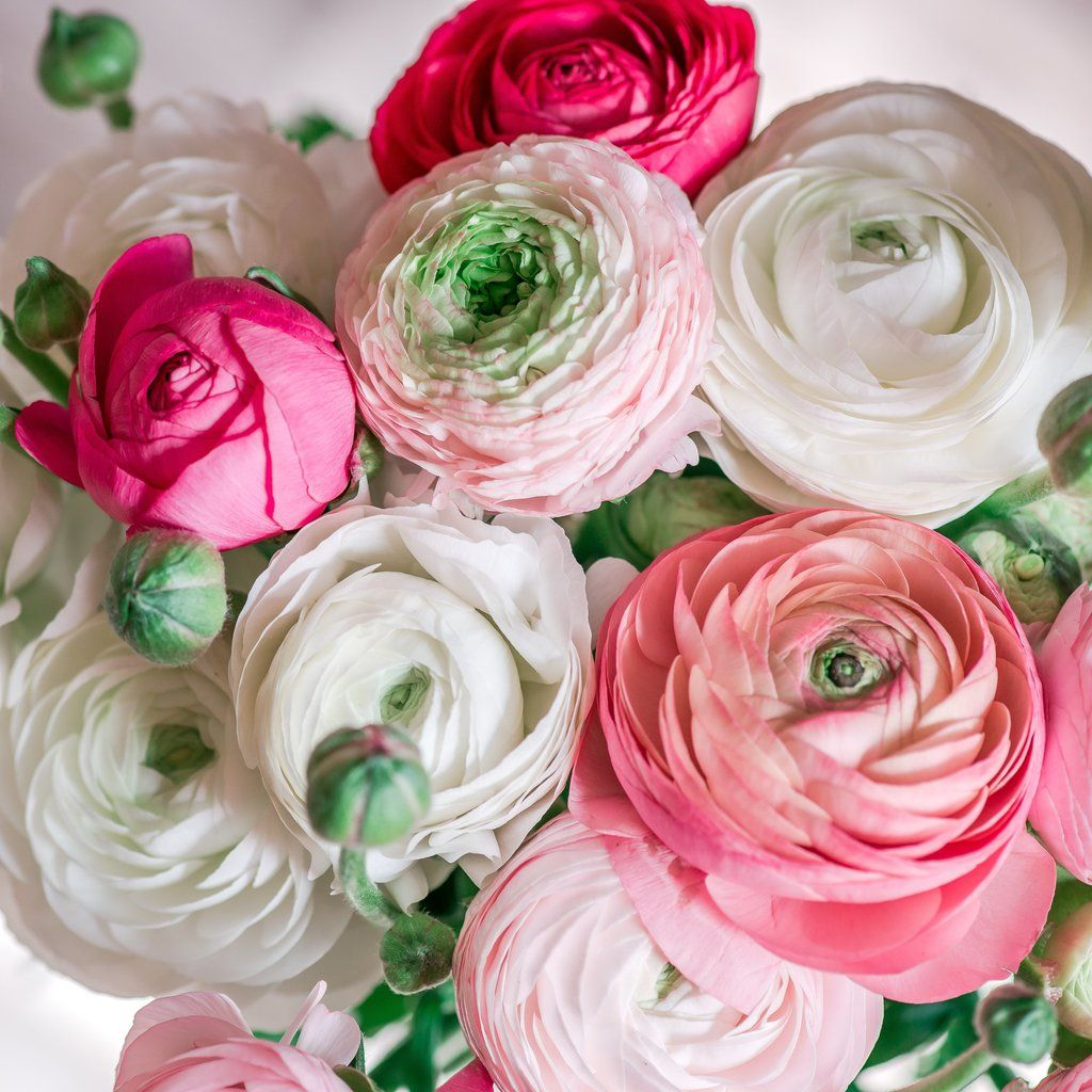 Pin By Emily Donald On Backyard In 2020 Ranunculus Centerpiece Ranunculus Bouquet Ranunculus Arrangement