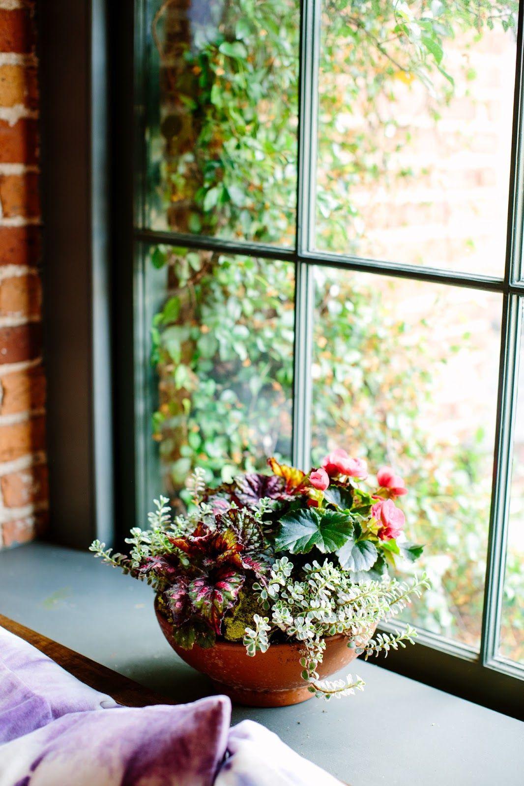 картинки окна с растениями нога свидетельствует