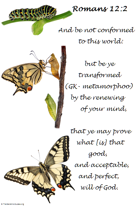 Transformation, Butterfly, Caterpillar, Hope, Purpose in
