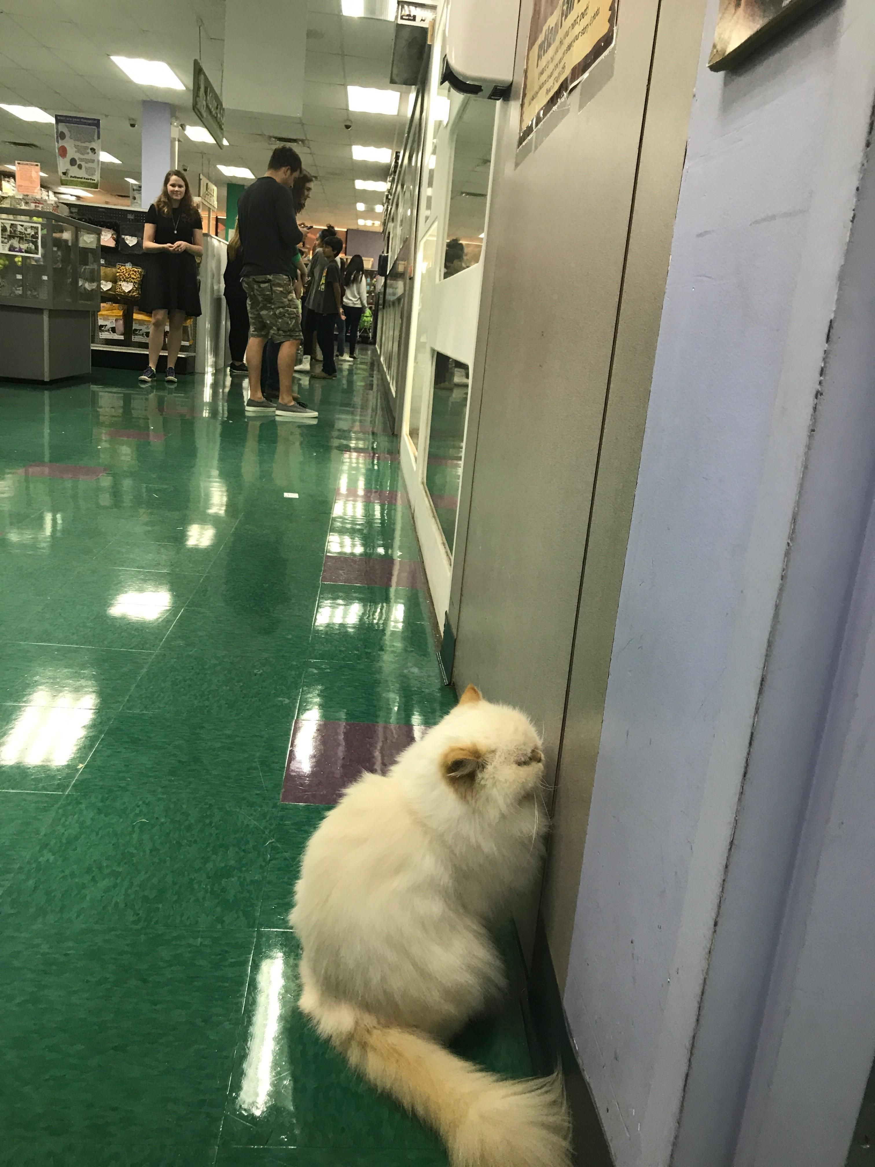 My Sis Goes To Her Local Pet Store Where The Owners Cat Gets Shy And Tries To Become Part Of The Wall Https Ift Tt 2slrijm Pet Store Pets Cat Day