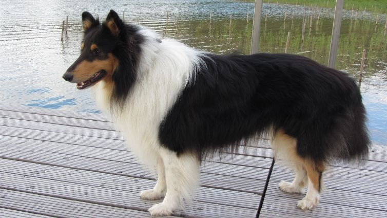 Check Out These Small Dog Breeds That Dont Shed And Find Out Which One Of Them Could Be Pe In 2020 Dog Breeds That Dont Shed Hypoallergenic Dogs Small Small Dog Breeds