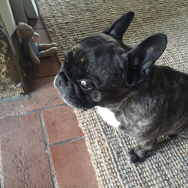 I M Watching Mommy No More Photos Please Frenchbulldog