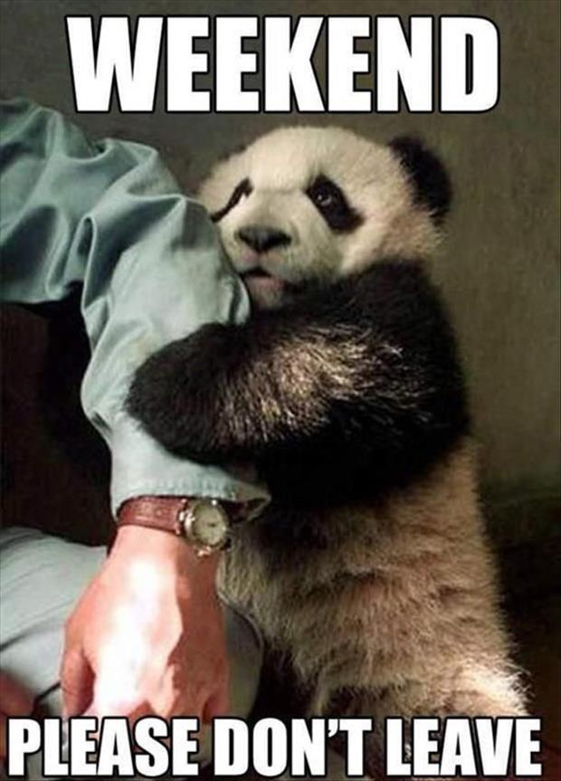 Pin On Panda Bears