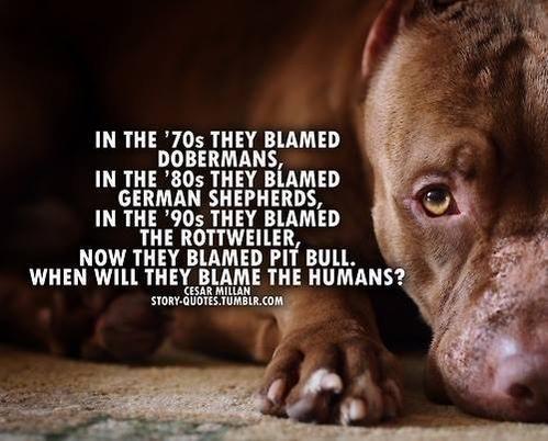 Dogmadshell On Pitbulls Pitbull Terrier Doberman