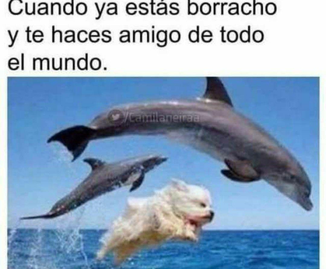 Memes 16 Hacer Amigos Humor Divertido Sobre Animales Memes Divertidos
