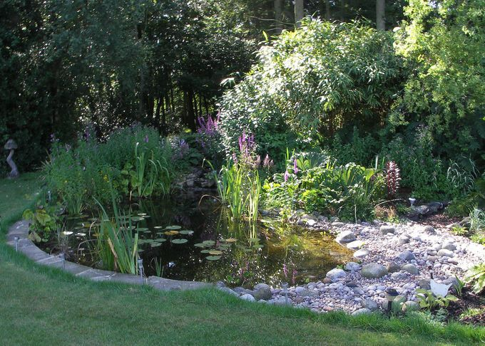 Image Result For Pond Ideas Uk