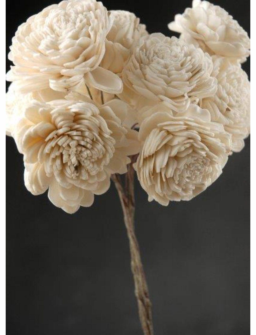 Wholesale tapioca wood sola flowers eco friendly bridal wedding wholesale tapioca wood sola flowers eco friendly bridal wedding flowers on stems 10 stems by baubleandflair izmirmasajfo